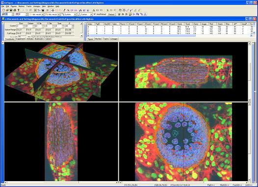 GoFigure software screenshot